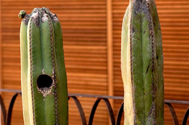 Azul-Oaxaca-Hotel-Mexico-Esware-Design-6.jpg