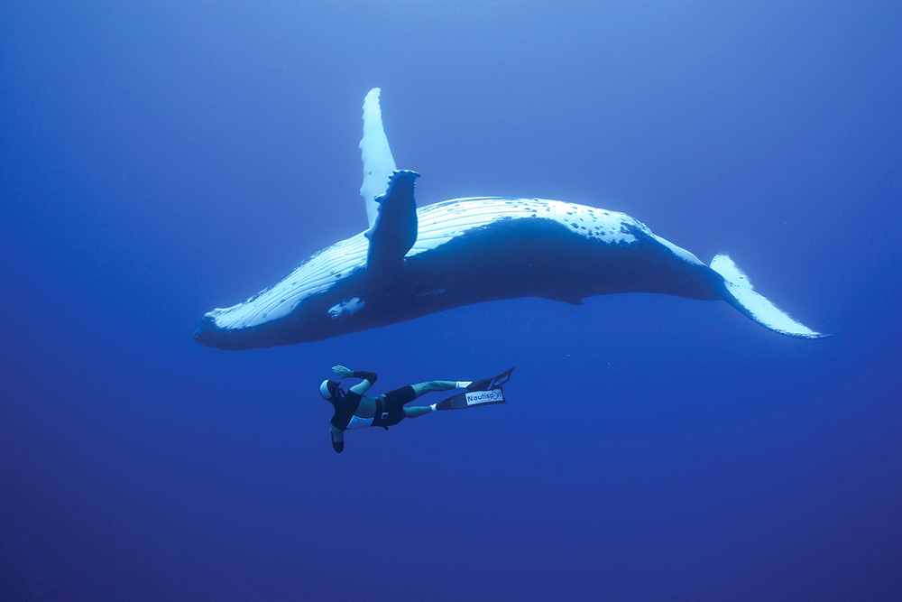 Whale-Diving-Dive-With-Whales-Tonga-2.jpg