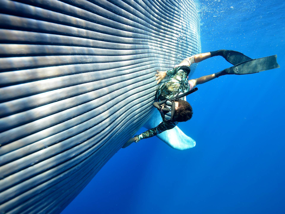 Whale-Diving-Dive-With-Whales-Tonga-1.jpg