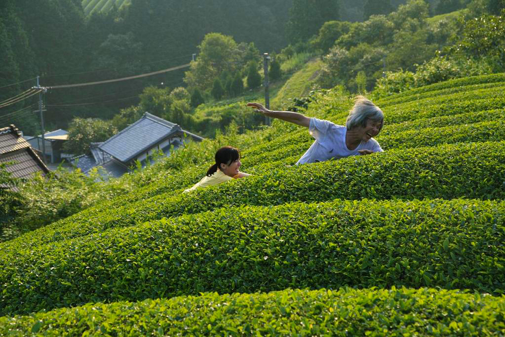 Tour Tea fields plantation in Wazuka Japan