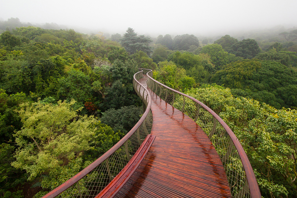 The Boomslang Bridge by Mark Thomas Architects in Cape Town, South Africa