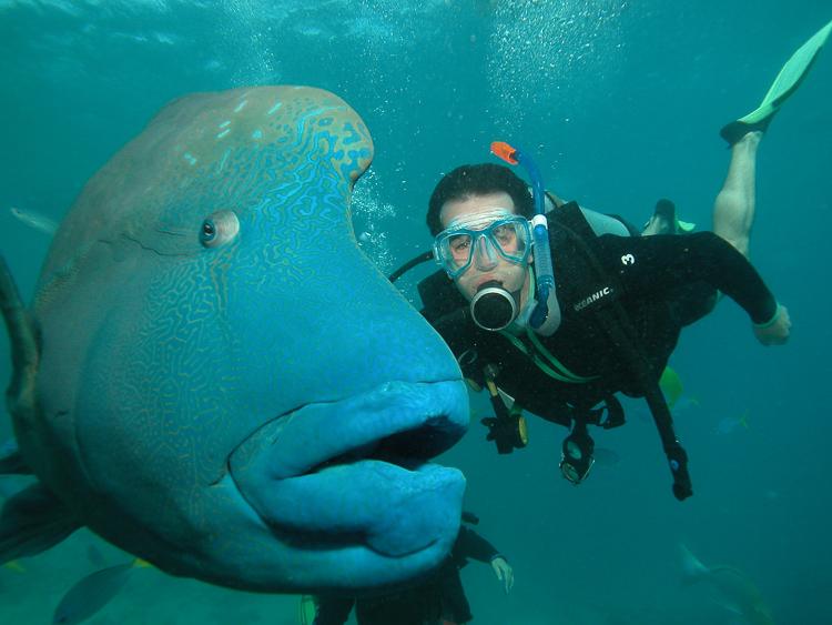 Australia diving