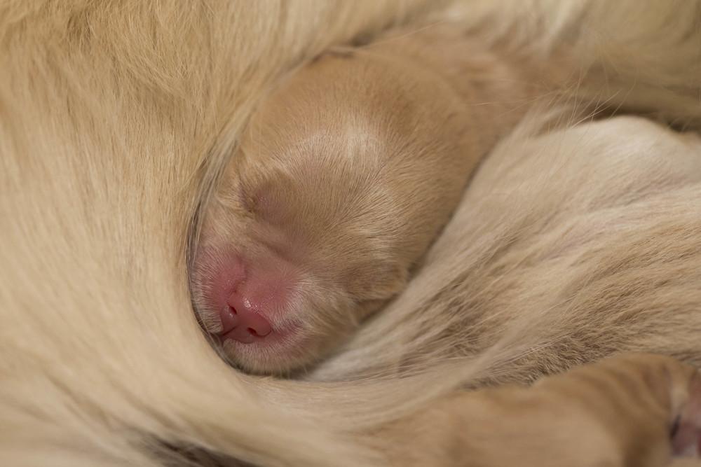 puppy portfolio (1 of 1).jpg