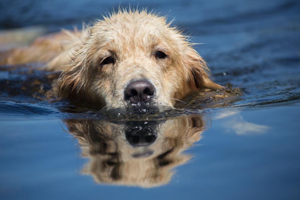dog (1 of 1).jpg