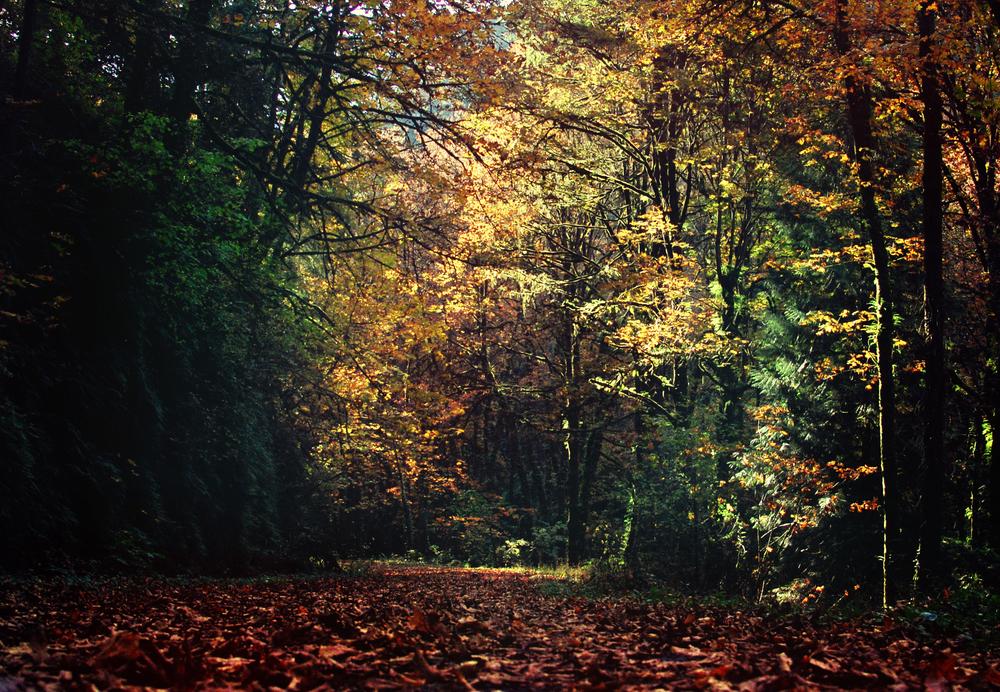 Forest_Park.jpg