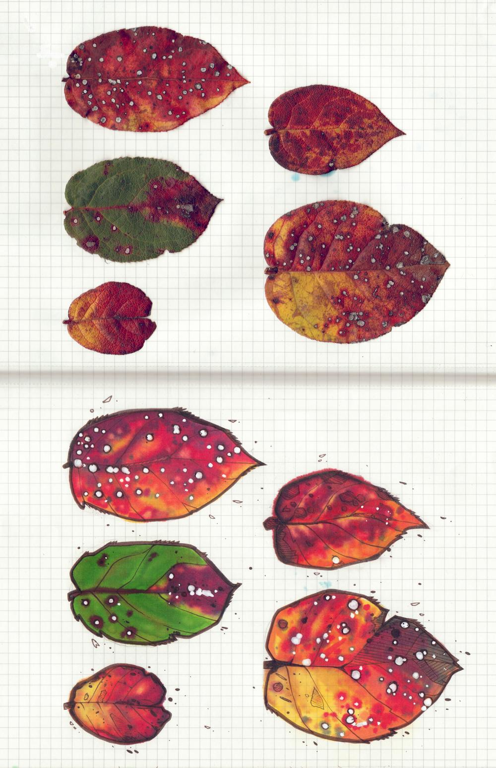 Leaves_vert.jpg