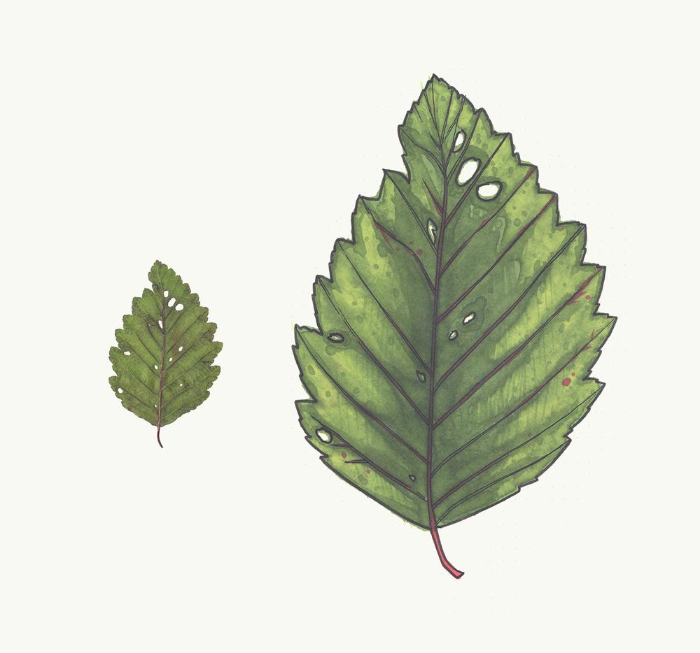 Leaf2_low.jpg