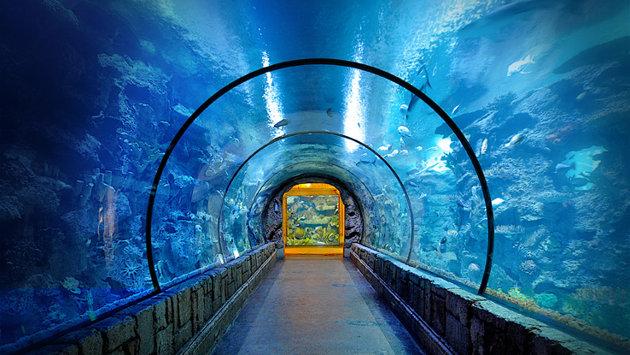 Shark Reef Aquarium found at the Mandalay Bay Resort and Casino.