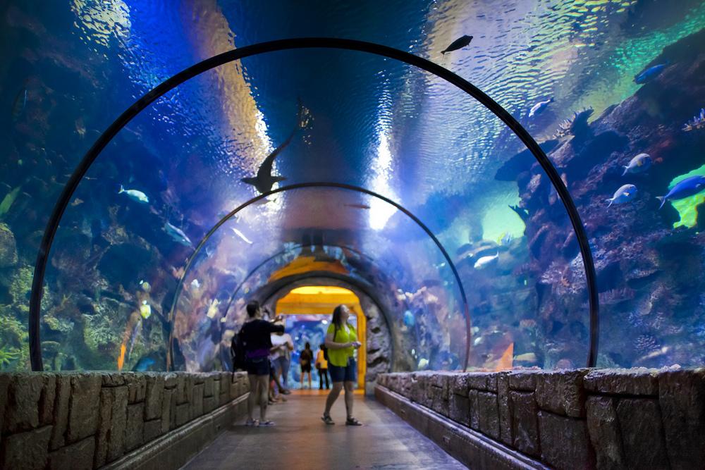 Shark Reef at Mandalay Bay Hotel & Casino Las Vegas