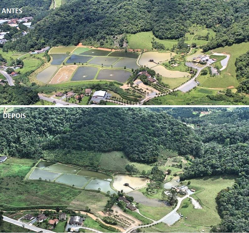 Em 2013, foi iniciado o plantio de 5 mil mudas de espécies nativas da região de Gaspar/SC (Fotos: Divulgação)