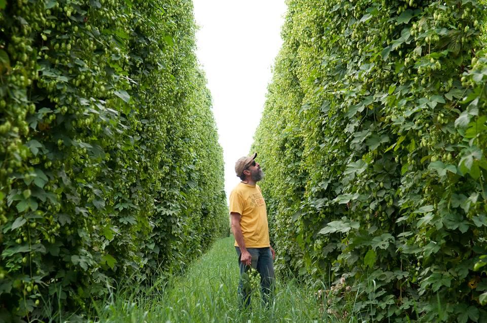 Mestre-cervejeiro John Maier na plantação de lúpulos na fazenda Rogue (Foto: Divulgação)