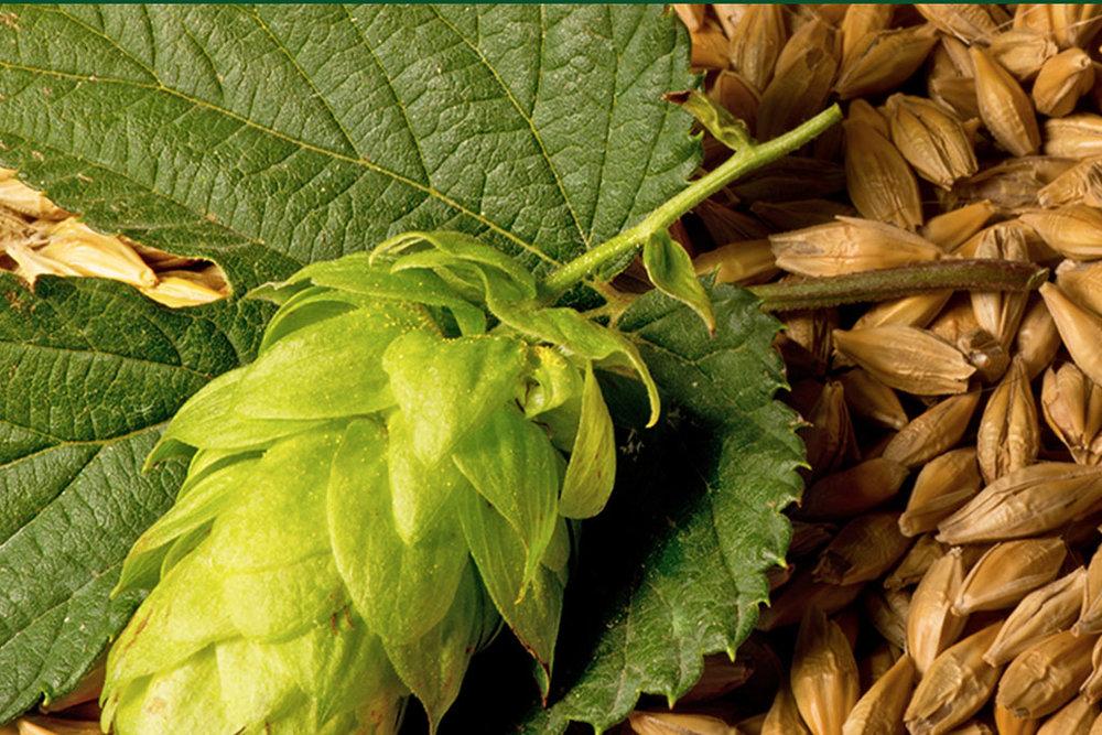 Realizado desde 2012, o Concurso Cervejeiro Caseiro Bierland é uma oportunidade para homebrewers verem a sua receita produzida em grande escala (Foto: Divulgação)