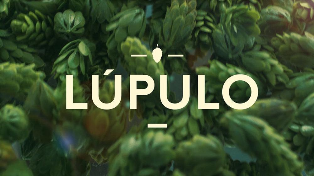 Lúpulo, ao lado da água, do malte e da levedura, completa a base de ingredientes da cerveja (Foto: Divulgação)