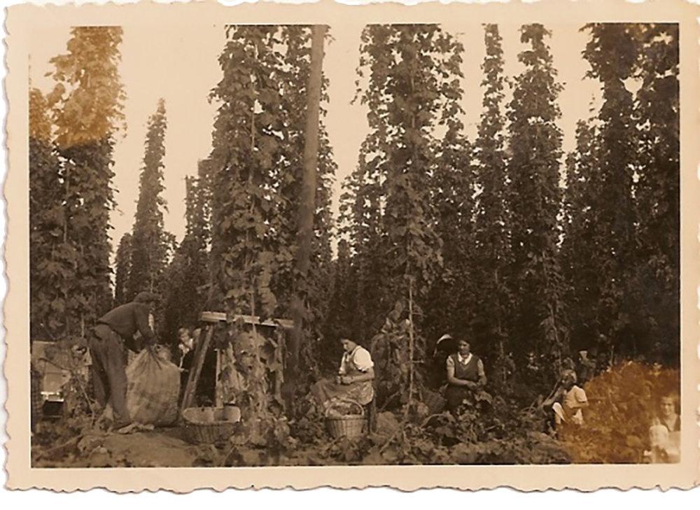 Álbum de família conserva cenas do período em que se cultivava lúpulo em Nova Petrópolis/RS (Foto: acervo da família Hoblik)