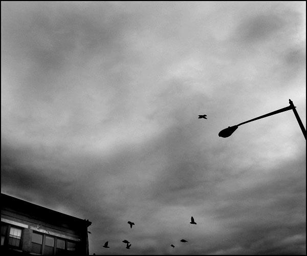 1201birds-w.jpg