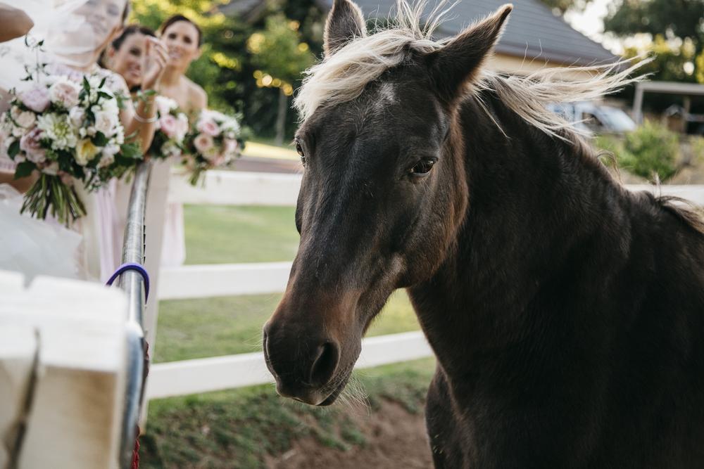 Brookleigh-Estate-Wedding055.jpg