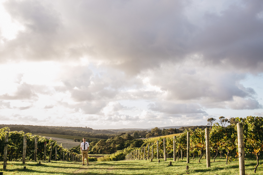 groom at wills domain vineyard