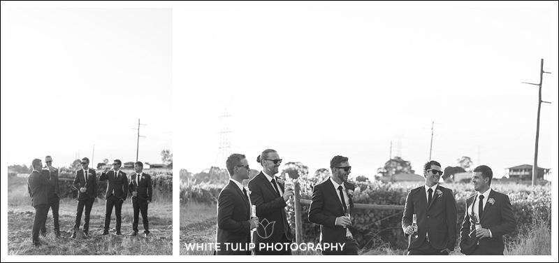 groomsmen in vineyard wedding