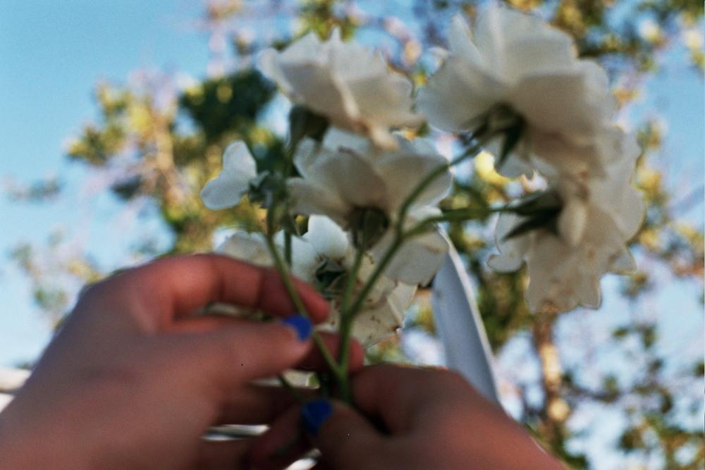 flowersmjbernier.jpg