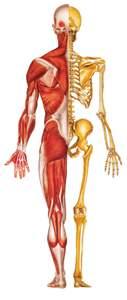 geelong-osteopath-logo