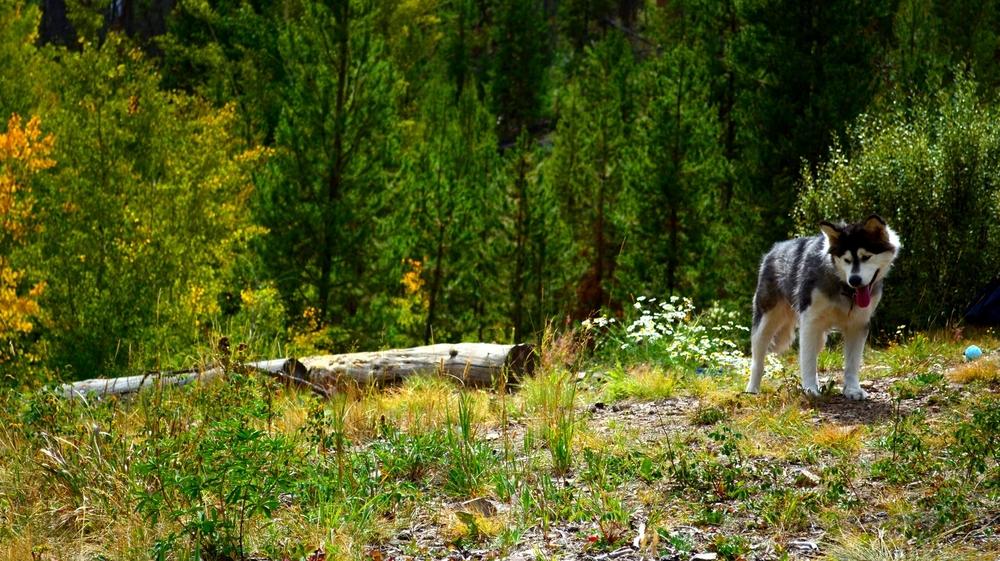 Poet in the Colorado, Rockies. Near Grand Lake, Colorado.