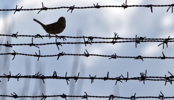 birdonwire.jpg