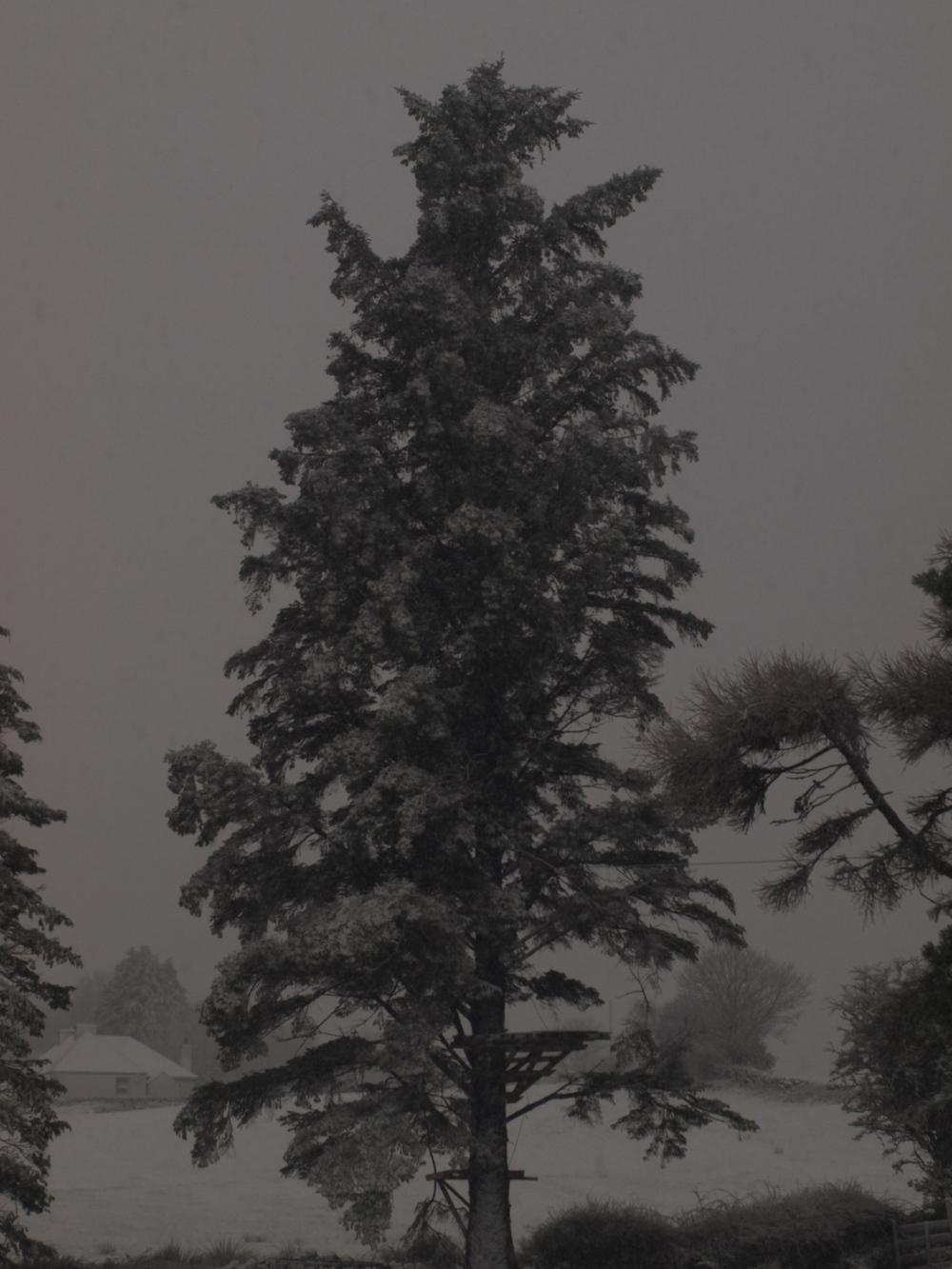 P1019387.jpg