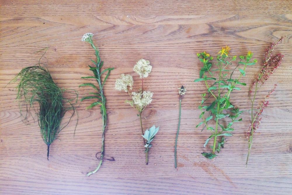 Horsetail; Yarrow; Meadowsweet; Plantain; St.John's Wort; Sorrel