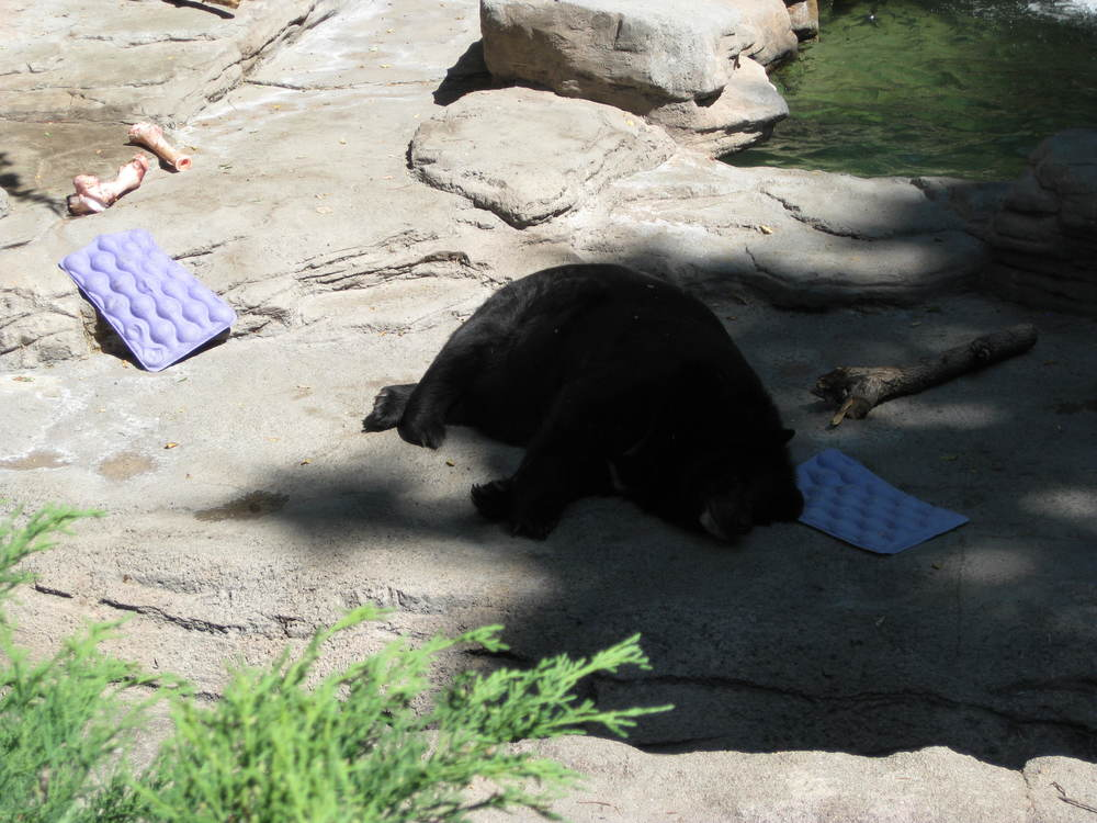 This bear is having a recovery winter. There's no shame in that, bear.