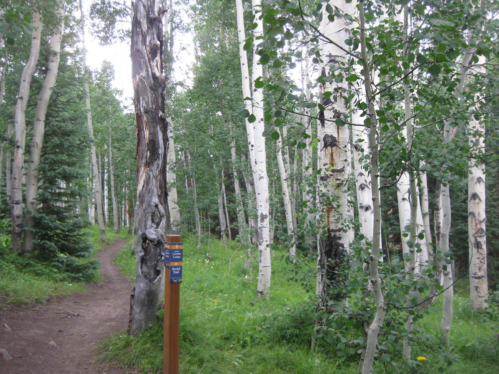 Another obnoxious Crested Butte trail.