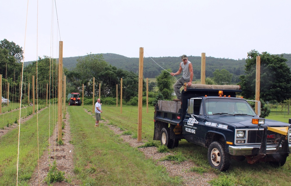 The hops need string to climb as high as the posts
