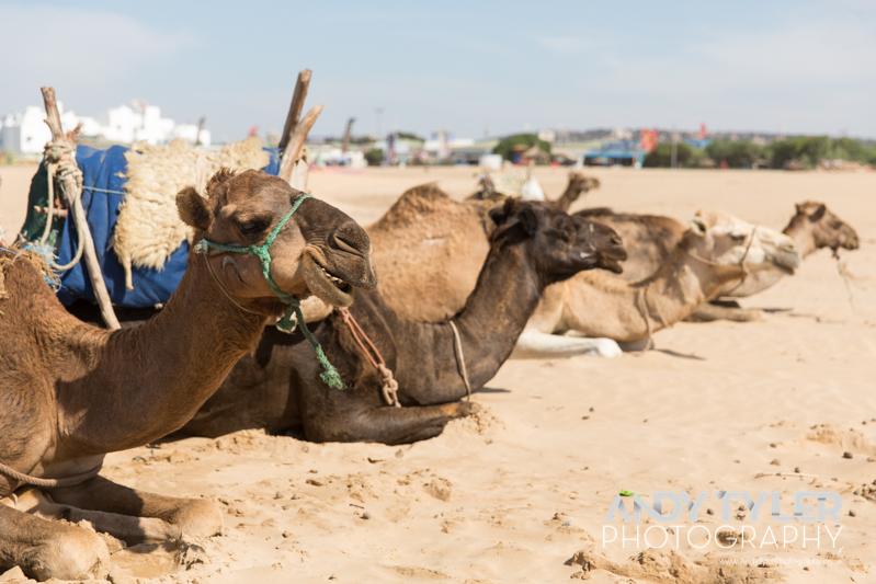 Morocco-8656.jpg