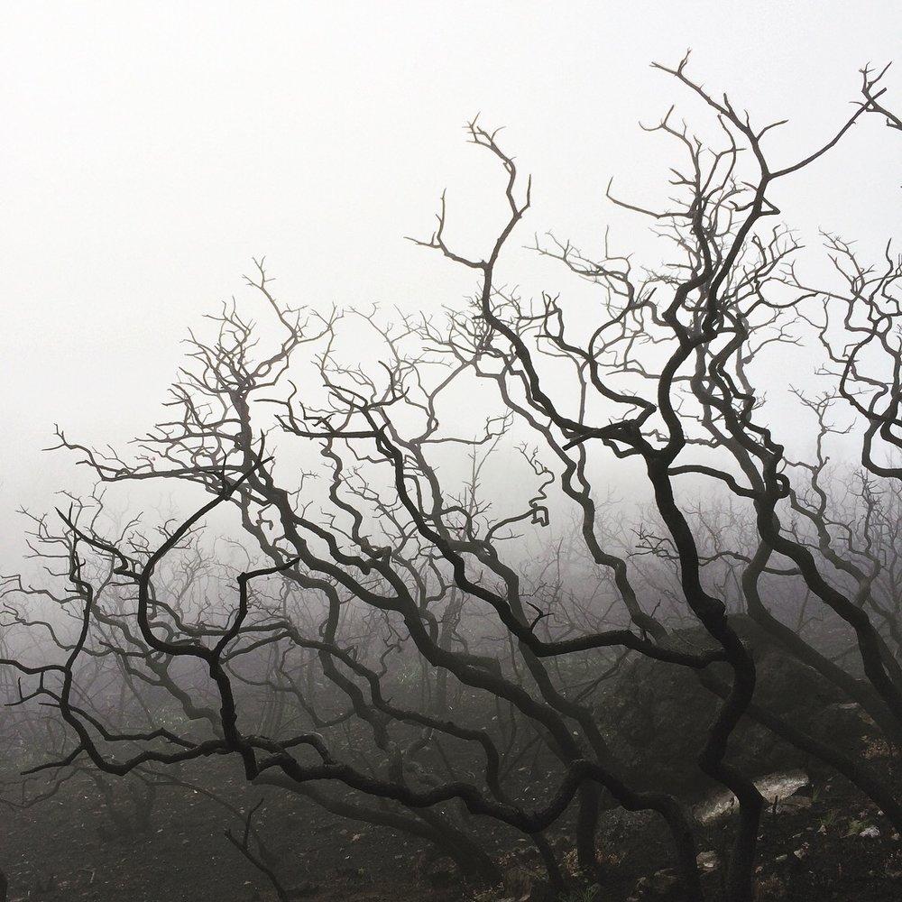 Manzanita, Bald Mountain, Sugarloaf Ridge State Park