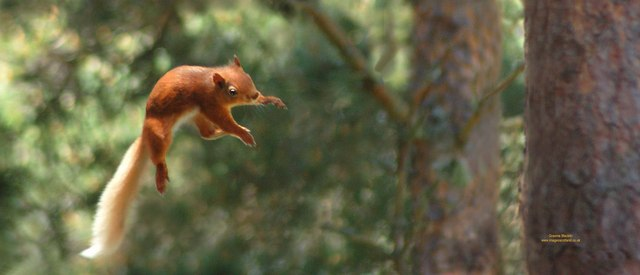 Squirrels are born bypassers.   (source)