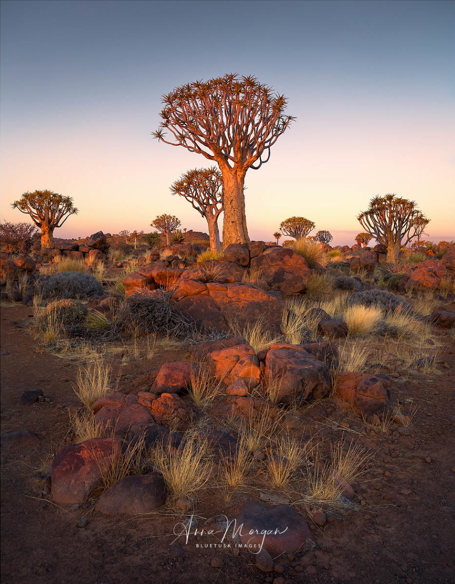 """Kokerboom Sunset""- Anna Morgan.   Very balanced and subtle compositions are her modus operandi, as in this serene desert shot. I also enjoy the unique feel of the landscape, I couldn't begin to tell you where this was. Africa maybe?"