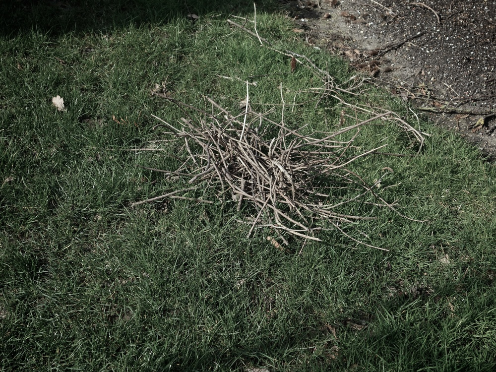 Bundle of twigs