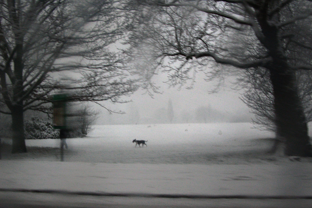 A dog in winter, Tooting Bec Common