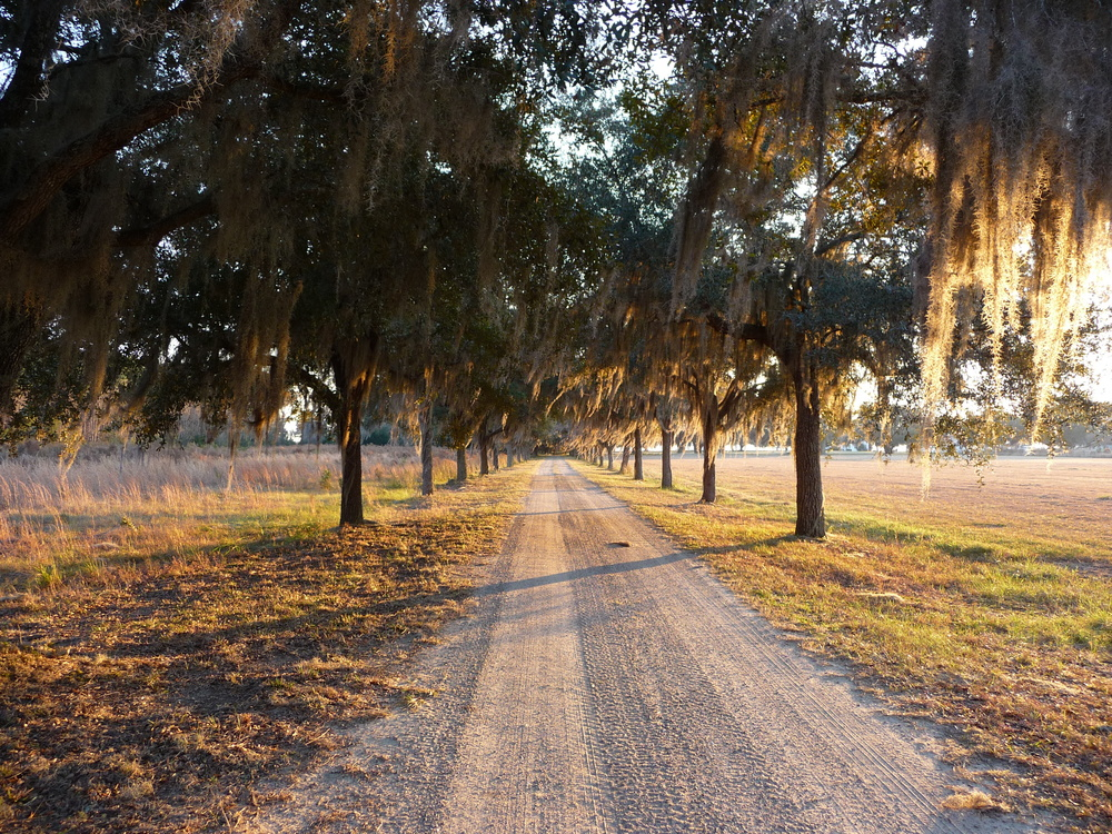 credit:  Beaufort County Open Land Trust