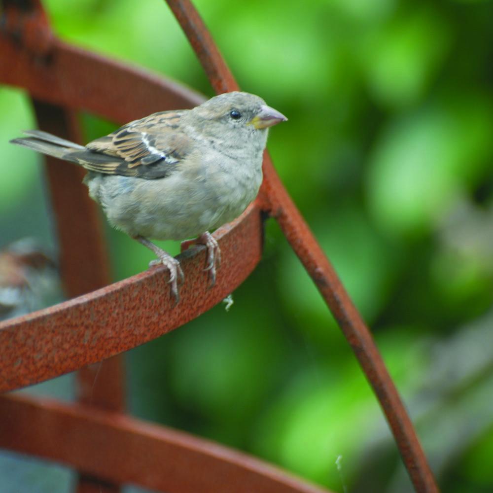 sparrowGlobe.jpg