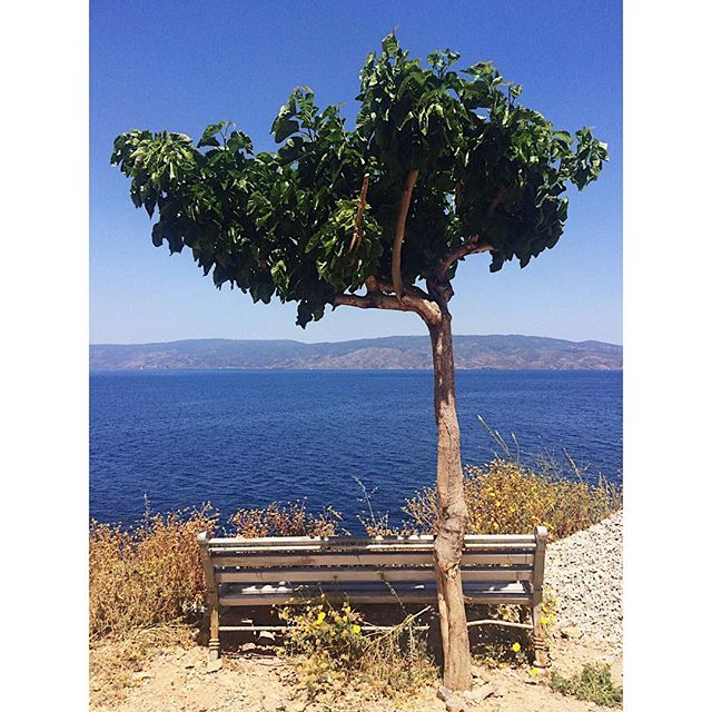 """Portrait of a bench"" by @nberinstein. Visiting Hydra in Greece. 🙌🏼 . . Witness Nina's journey and much more by following TheMG on IG. . . Become a resident artist and submit your work for ongoing features and exposure. No fee! Details on TheMG's website (link in bio) . . #passportready #instatravelling #instapassport #postcardfromtheworld #traveldeeper  #travelstroke #traveltheworld #igtravel #instago #travelpics #wanderer #wanderlust #travelphoto #travelingram #mytravelgram #travelphotography #tagsta_travel #arountheworld  #instago #ig_worldclub #worldcaptures #worldingram #traveller #travelersnotebook #hydra #greece #eurotrip #callforentries #callforartists2017"