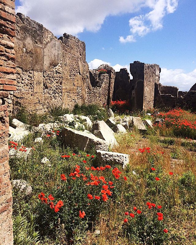Pompeii, #poppies & #ruins. 📷 by @nberinstein . . Witness Nina's journey and much more by following TheMG on IG. . . Become a resident artist and submit your work for ongoing features and exposure. No fee! Details on TheMG's website (link in bio) . . #passportready #instatravelling #instapassport #postcardfromtheworld #traveldeeper  #travelstroke #traveltheworld #igtravel #instago #travelpics #wanderer #wanderlust #travelphoto #travelingram #mytravelgram #travelphotography #tagsta_travel #arountheworld  #instago #ig_worldclub #worldcaptures #worldingram #traveller #travelersnotebook #pompeii #italy #eurotrip #callforentries