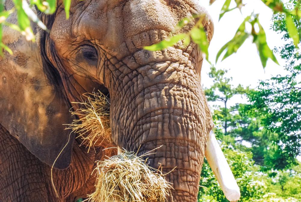 Toronto Zoo July 11 2010 107.jpg
