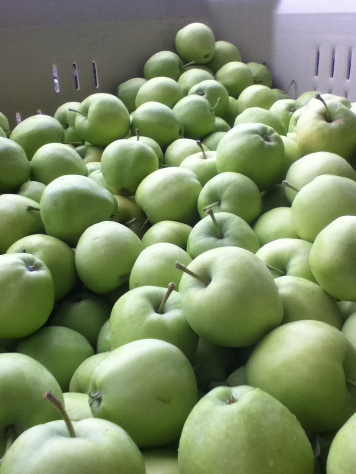 Gingergold Apples from Smallwood Farms, Okanogan