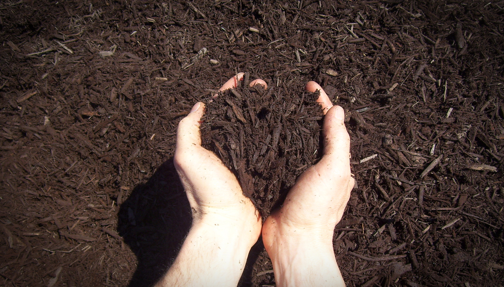 Dark brown colored mulch in Ohio
