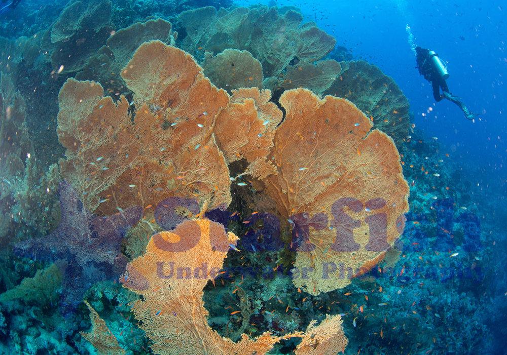 Red Sea133.jpg