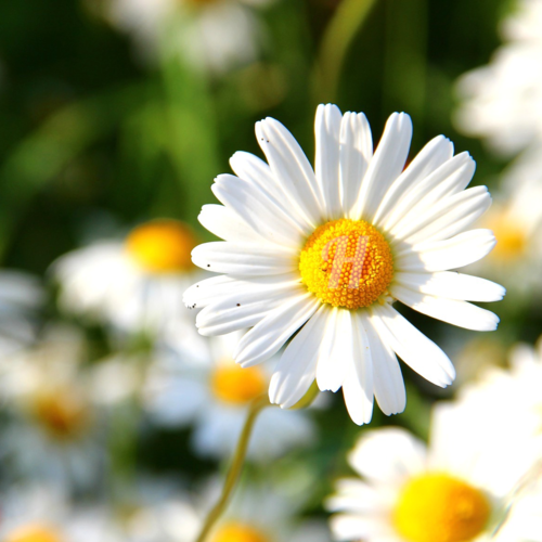 Hourchive_Flowers.png