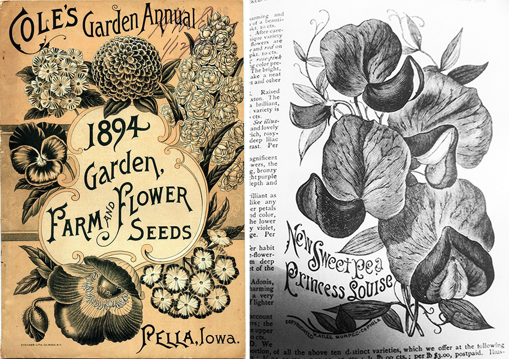 Turn of the century seed catalogues provided the inspiration.