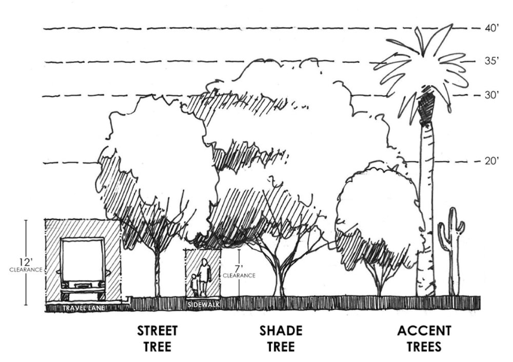 Different types of trees serve different purposes in the landscape.