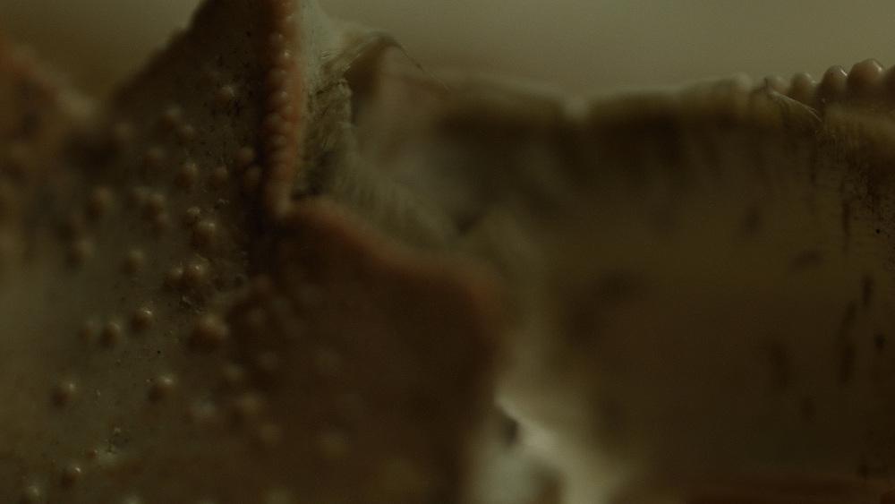 Macro_Crab_Legs_Stills_12.jpg