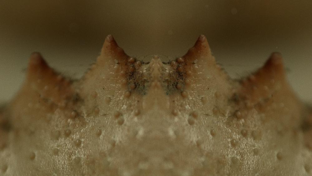 Macro_Crab_Legs_Stills_17.jpg